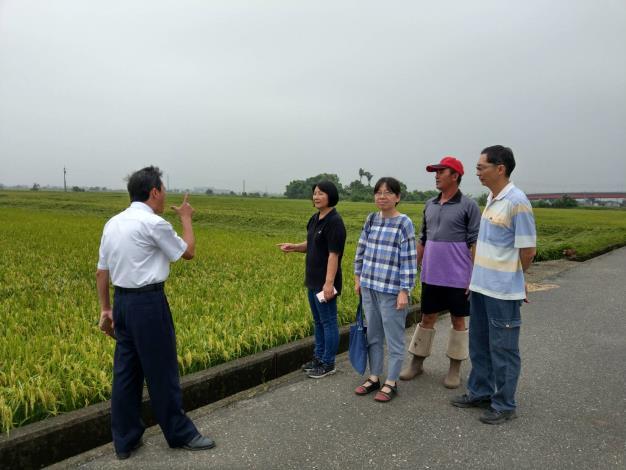 0520豪雨水稻損害程度6%(共2張)-1