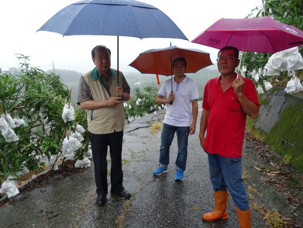 農業局長李朝塘冒雨南化視察芒果產銷情形 果農反應今年會有不錯收成(共4張)-1
