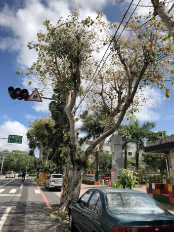 為維護用路人安全 市府移除感染腐朽菌之行道樹(共2張)-1