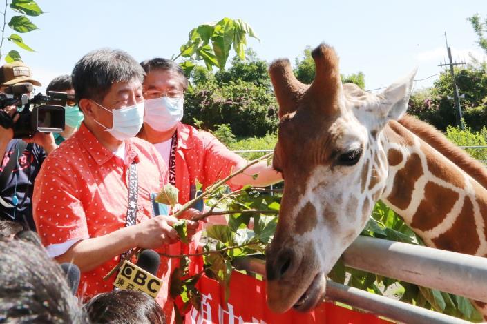 市長與陳部長體驗長頸鹿餵食秀