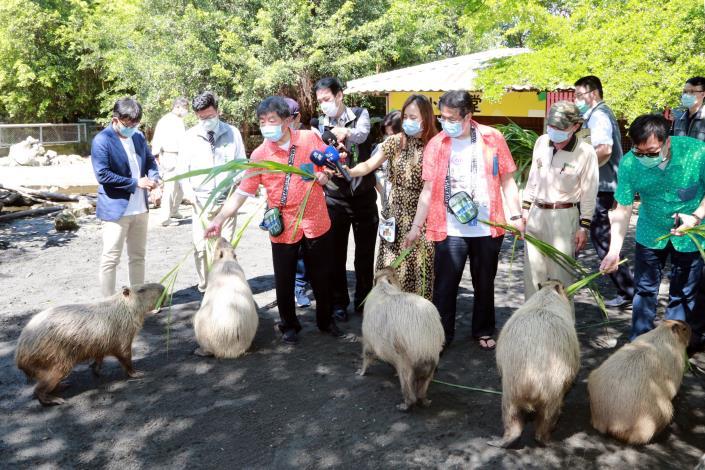 市長與陳部長體驗水豚餵食