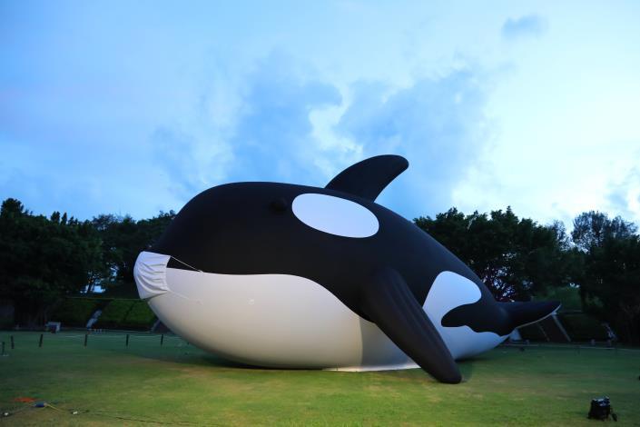 全球最大 安平虎鯨Orca檢疫期滿 黃偉哲:711千人護鯨伴游進港(共4張)-1