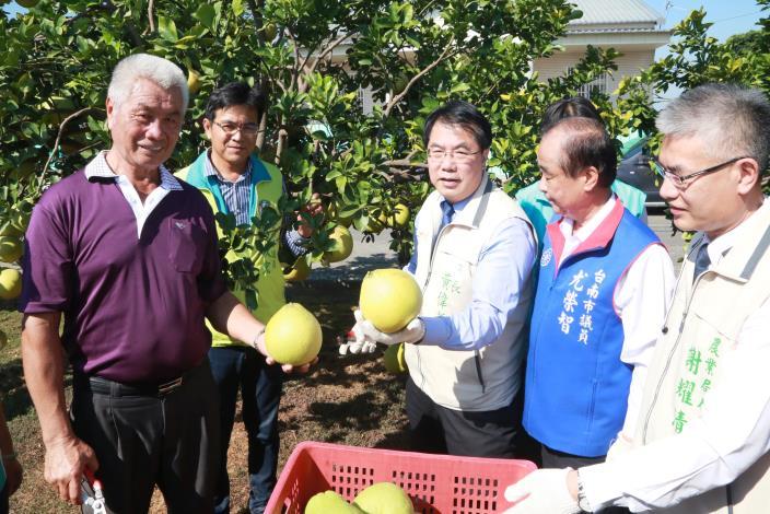 台南紅柚鮮採上市 黃偉哲歡迎全國鄉親及早訂購保證一試成主顧(共5張)-1