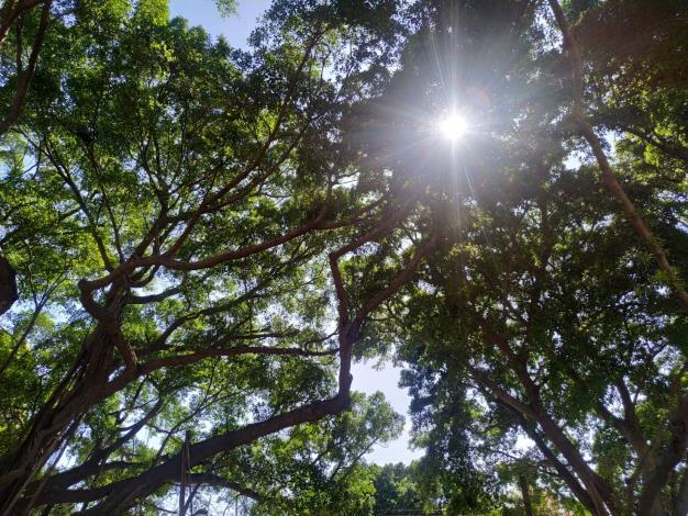 台南市新開闢大涼、長興生態公園 春節好行春(共4張)-1