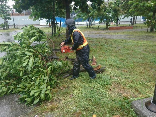 白鹿颱風臨去秋波帶來樹木災情已大致處理完成-移除路樹