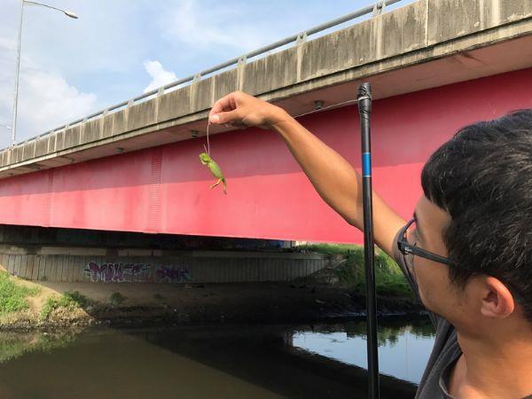 圖3:三爺宮溪綠鬣蜥捕捉工作