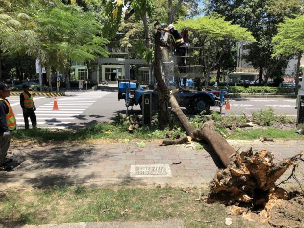 SOP 解決倒樹危機-路樹修剪