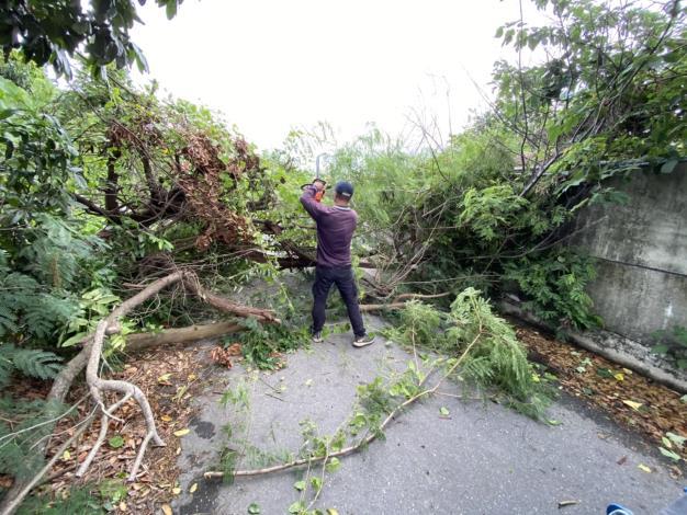 SOP 解決倒樹危機-清除路倒樹木