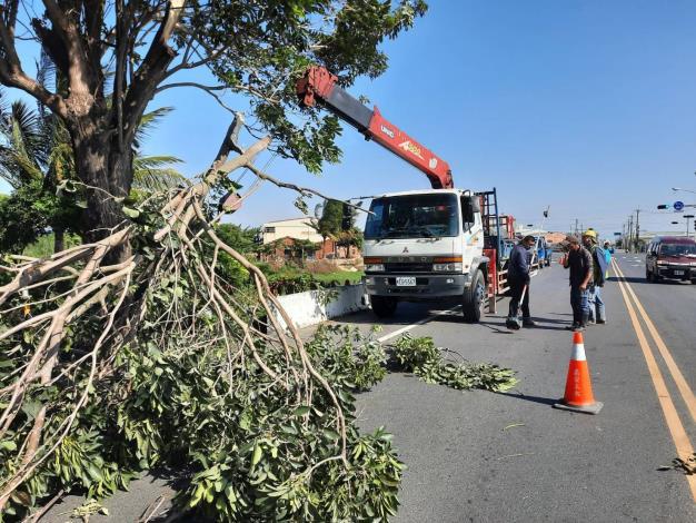 吊掛路倒樹木移除作業