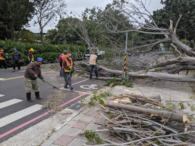 強風吹倒路樹移除作業