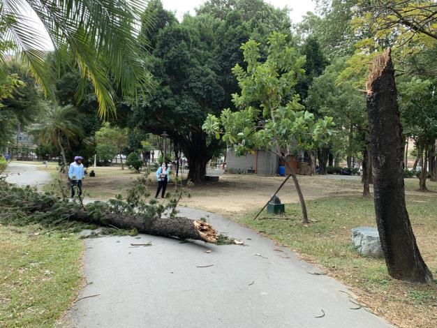 強風吹倒公園內樹木清除作業
