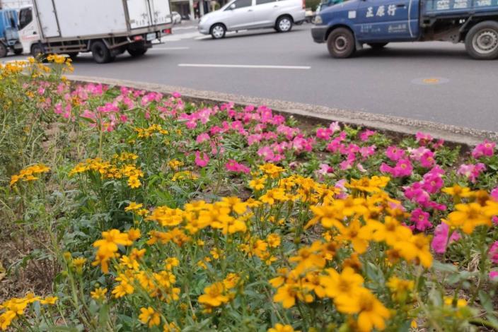 安全島種植花草