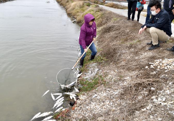 圖2.現勘魚塭多數損失魚體已清理僅剩少數魚損