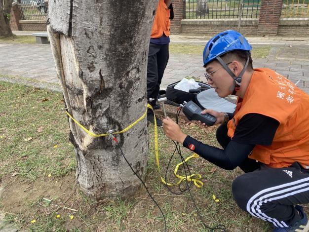 樹木內部風險表面不易查覺