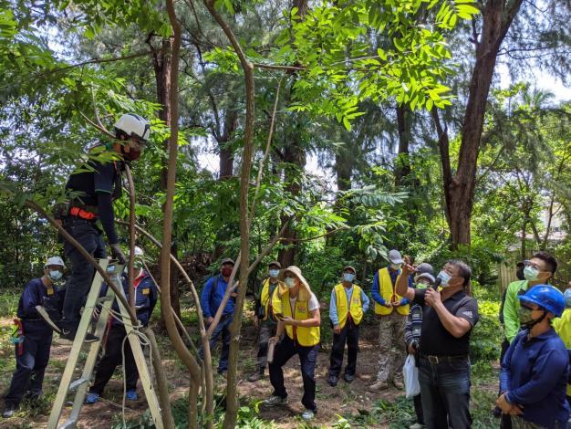 景觀樹木修剪判定與工具操作
