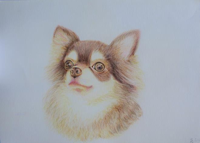 022--蘇品涵繪畫創作展-毛小孩動物系列