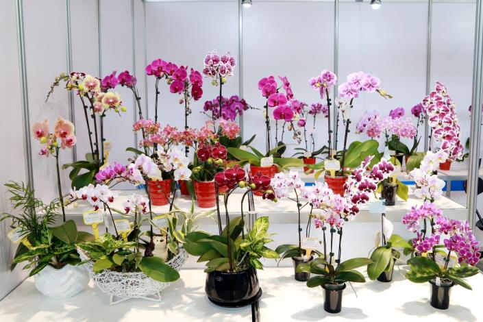 Worldwide Buyers Gather at Taiwan International Orchid EXPO-4