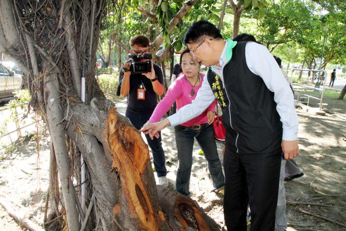 顏副市長到南區文華公園視察公園內樹洞有無登革熱孳生源情形