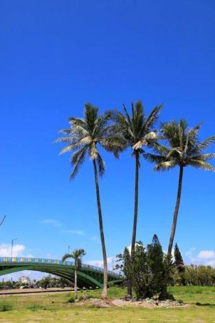 歷史水景公園景觀步道橋工程-的椰子樹