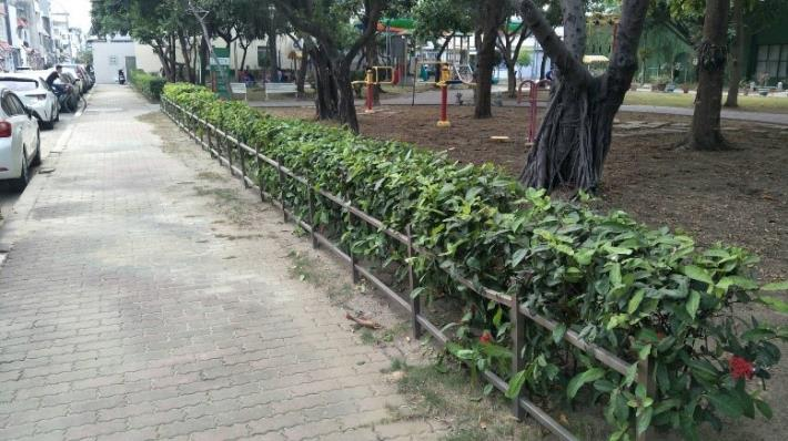 文華公園十里香綠籬