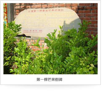 第一棵芒果樹碑