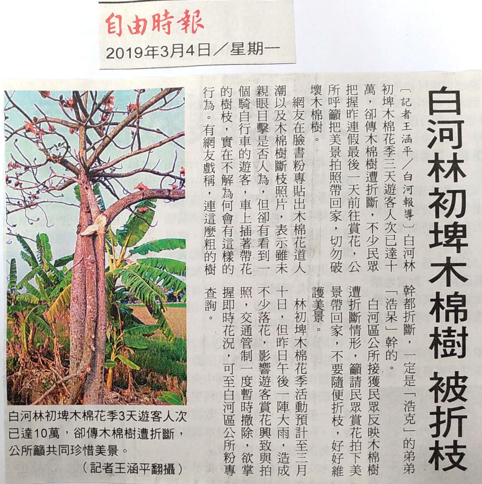 林初埤木棉樹被折枝