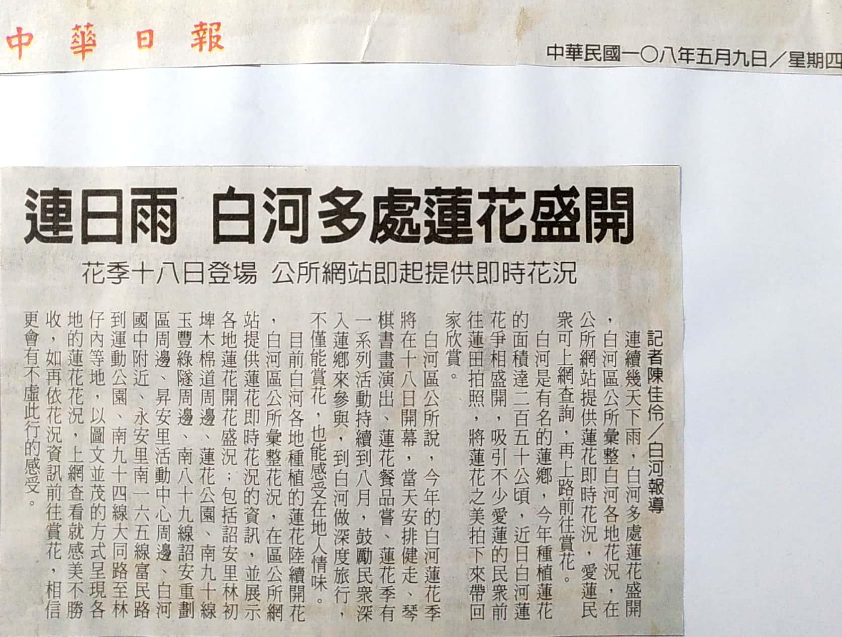 白河蓮花多處盛開-中華日報