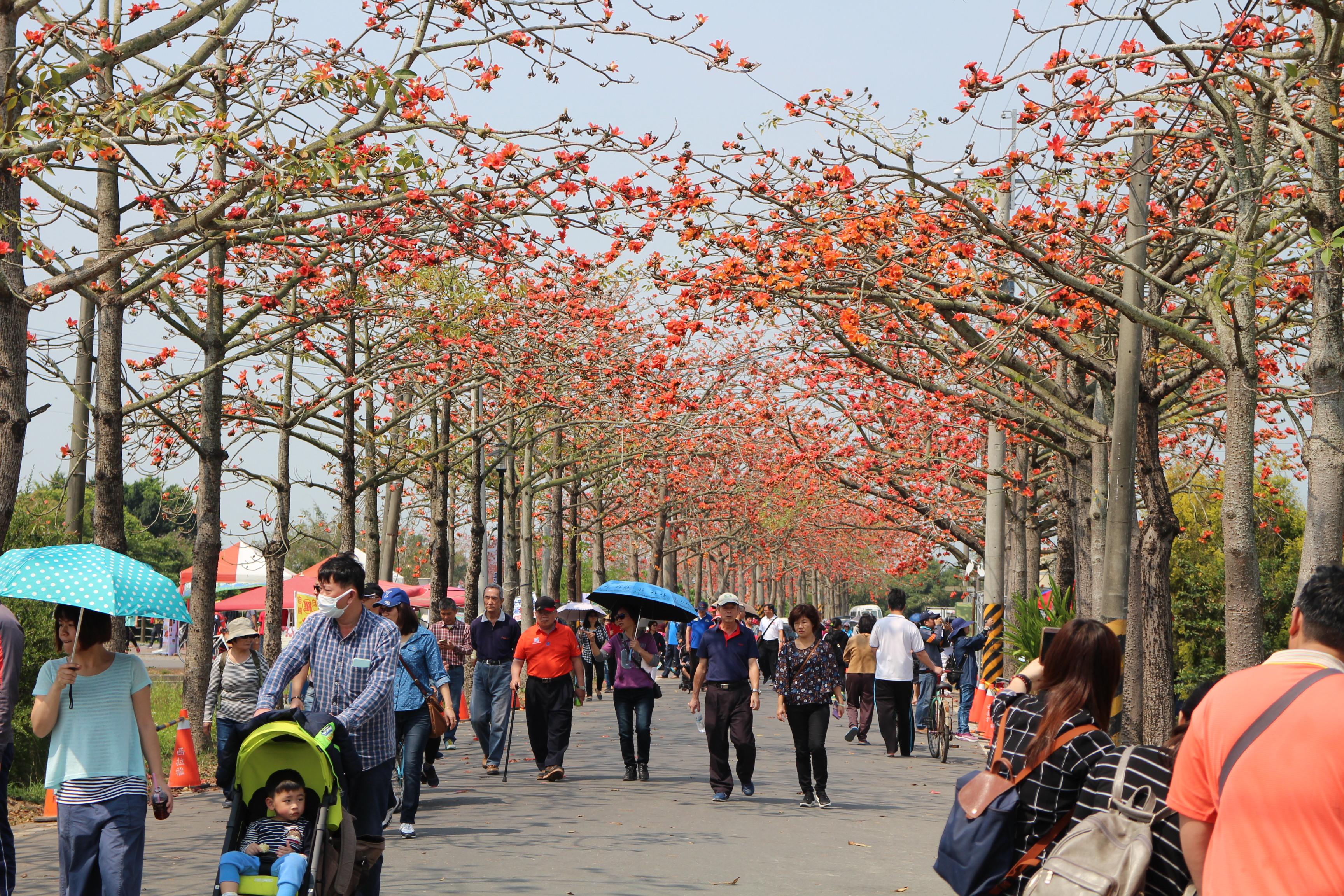 中午時分仍有大量遊客撐著陽傘賞花