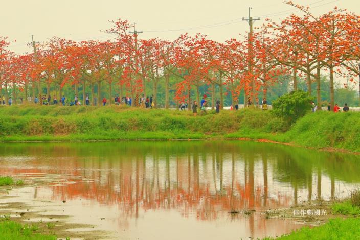 夕陽紅映林初埤