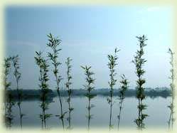 林初埤景觀區風景照片