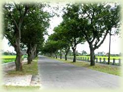 竹門綠色隧道