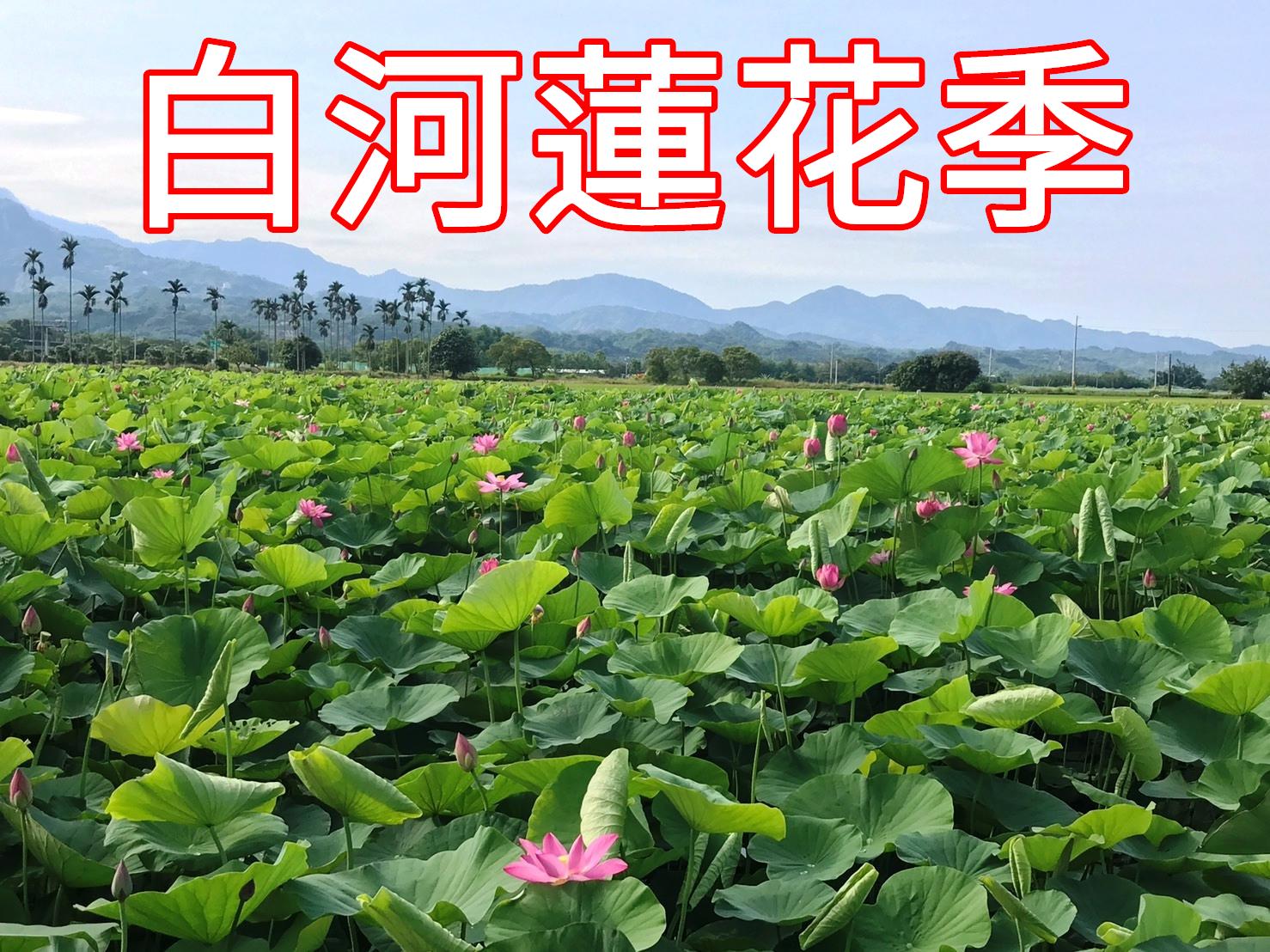 白河蓮花季專區連結