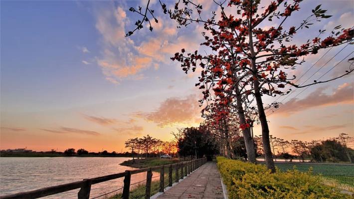 夕陽下的木棉花道美景
