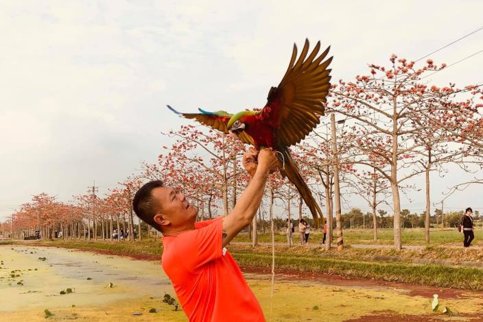 色彩斑斕的金剛鸚鵡