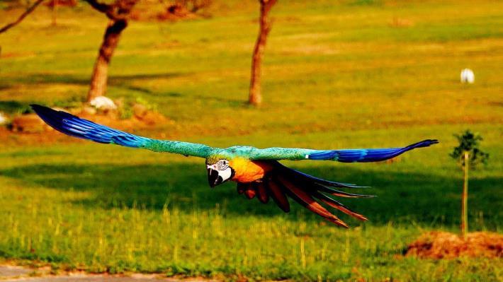金剛鸚鵡放飛活動