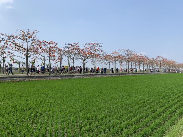 木棉花道與農田風景