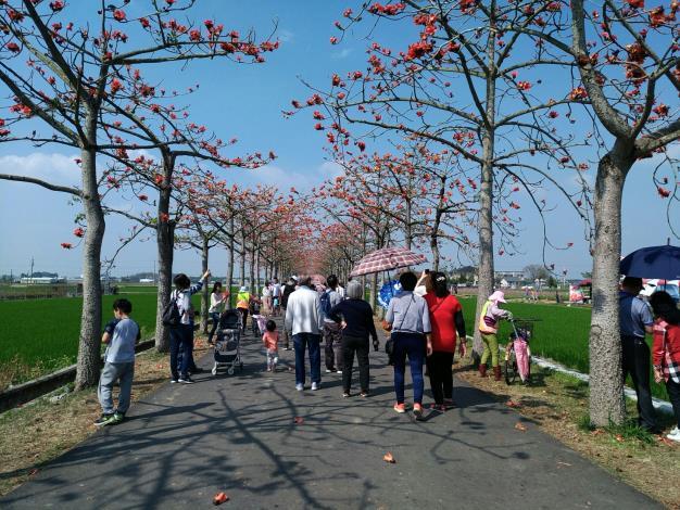 民眾在木棉花道賞花拍照