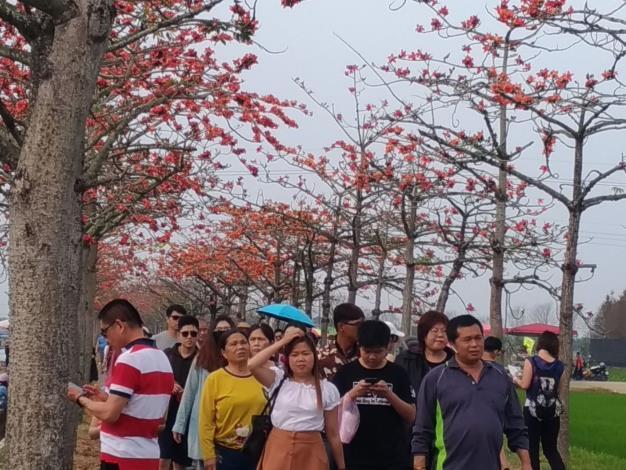 3月8日下午木棉道人潮眾多
