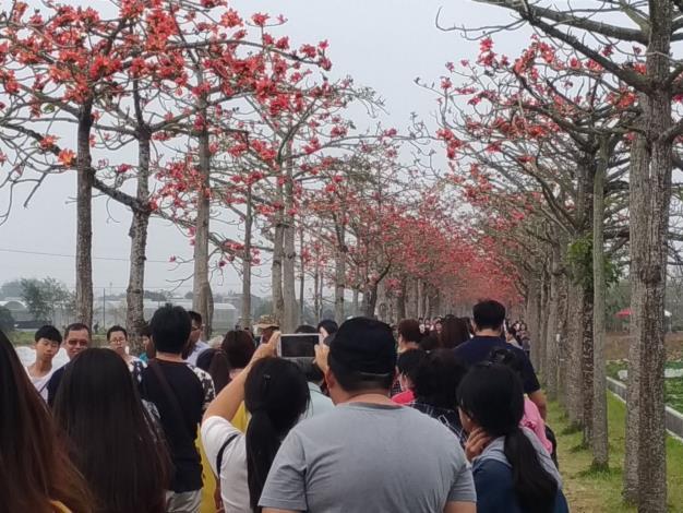 木棉花花況已全開,許多民眾前來賞花