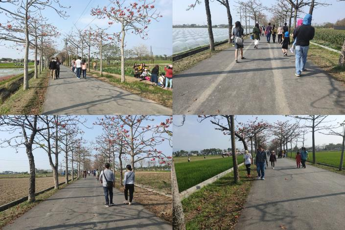 民眾在林初埤賞花拍照