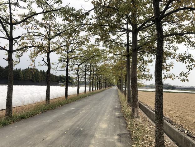 幹道旁木棉樹