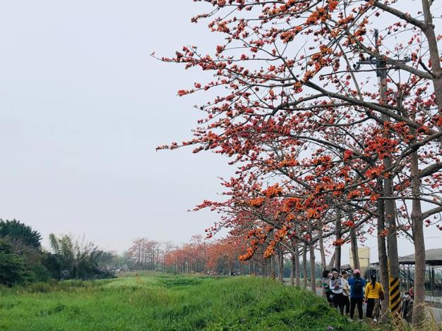 目前林初埤及南90周圍花況已8-9成開,主花道約為6成開