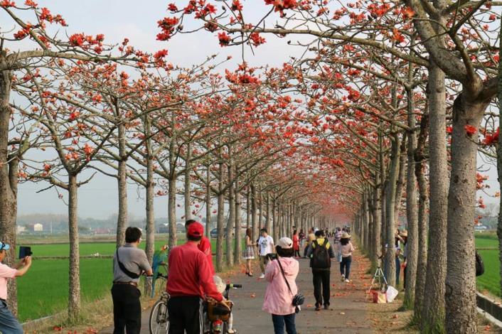 2021木棉花季活動來到最後一週,景色仍然十分美麗