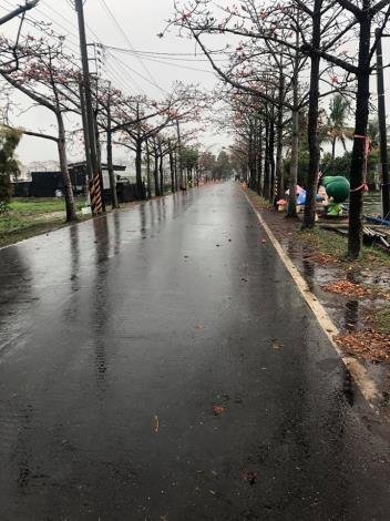 3月14日陰雨綿綿,木棉道路面溼滑
