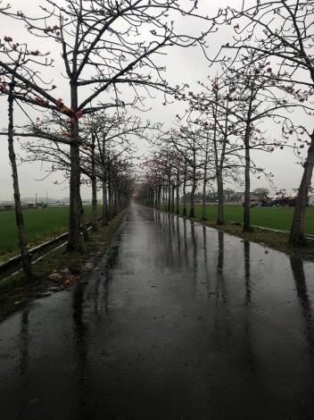 颳風下雨造成滿地落花