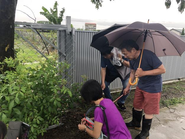 臺南區農業改良場研究人員至月津港現場採樣螞蟻檢體