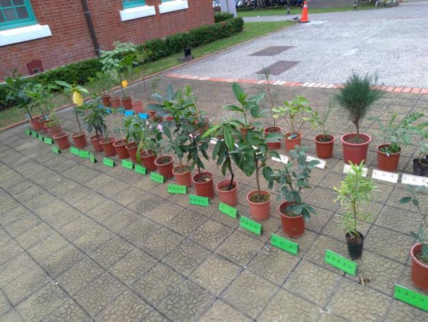 圖三、臺南地區濱海植物展示