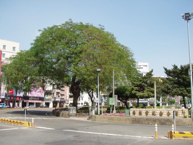 公園鳳凰木
