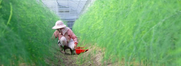 秧歌有機農園