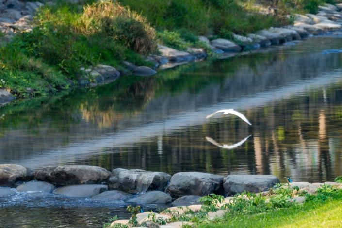 竹溪水環境改善-水清魚現、翠鳥現蹤跡